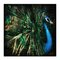 'Splendour' by Andrew Paranavitana Photographic Print Wrapped on Canvas
