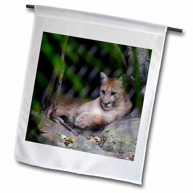3drose Cougar Sitting In Cave Brush Strokes C Polyester 18 X 12 In Garden Flag Wayfair