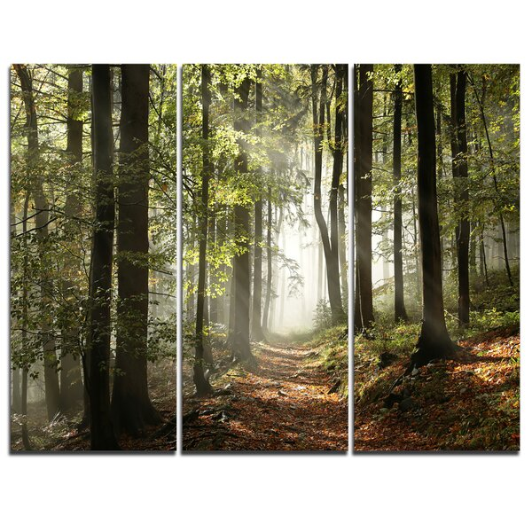 Designart Green Fall Forest With Sun Rays 3 Piece Photographic Print On Wrapped Canvas Set Reviews Wayfair