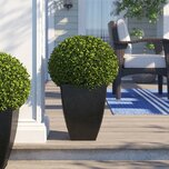 Boxwood Ball Square Boxwood Topiary in Planter
