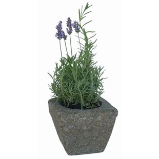 Klothilde Flower Pot By Sol 72 Outdoor