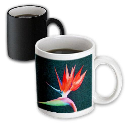 Symple Stuff Boutte Fire Bird Of Paradise Coffee Mug Wayfair
