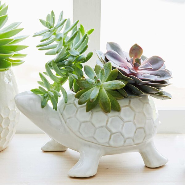 Wrought Studio Mcraney Turtle Ceramic Statue Planter & Reviews by Wrought Studio