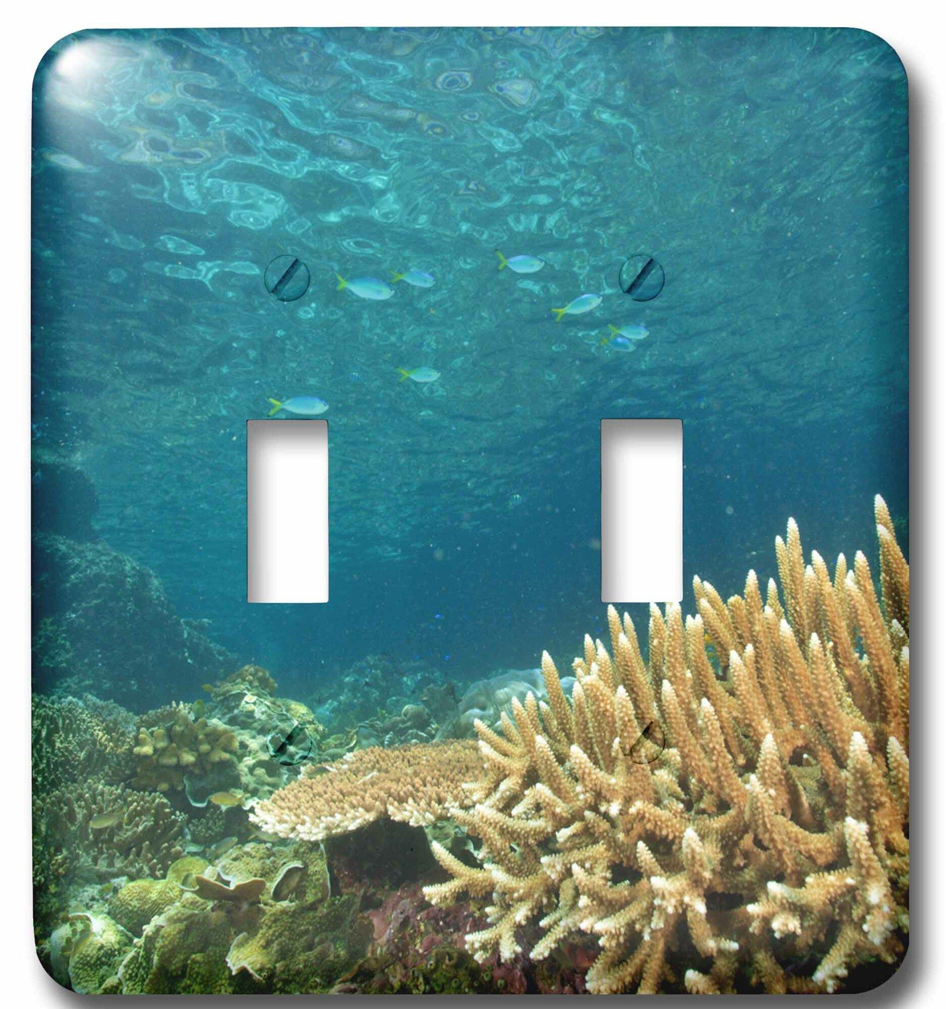 3drose Reef Fusilier Fish Raja Ampat Papua 2 Gang Toggle Light Switch Wall Plate Wayfair