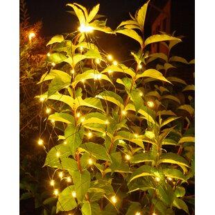 Chartreuse 80 LED Warm White Fairy Light Image