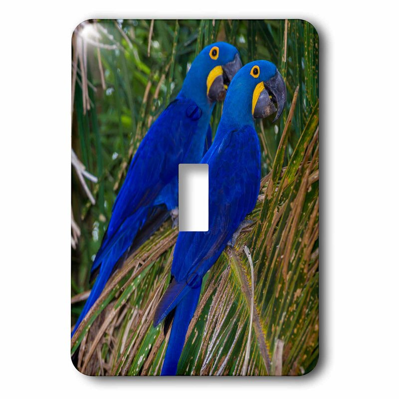 3drose Brazil Hyacinth Macaws A Vulnerable Species Of Parrot In The Panel 1 Gang Toggle Light Switch Wall Plate Wayfair
