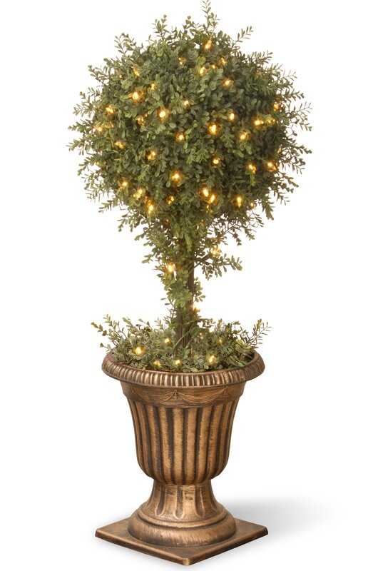 Floor Boxwood Topiary in Urn