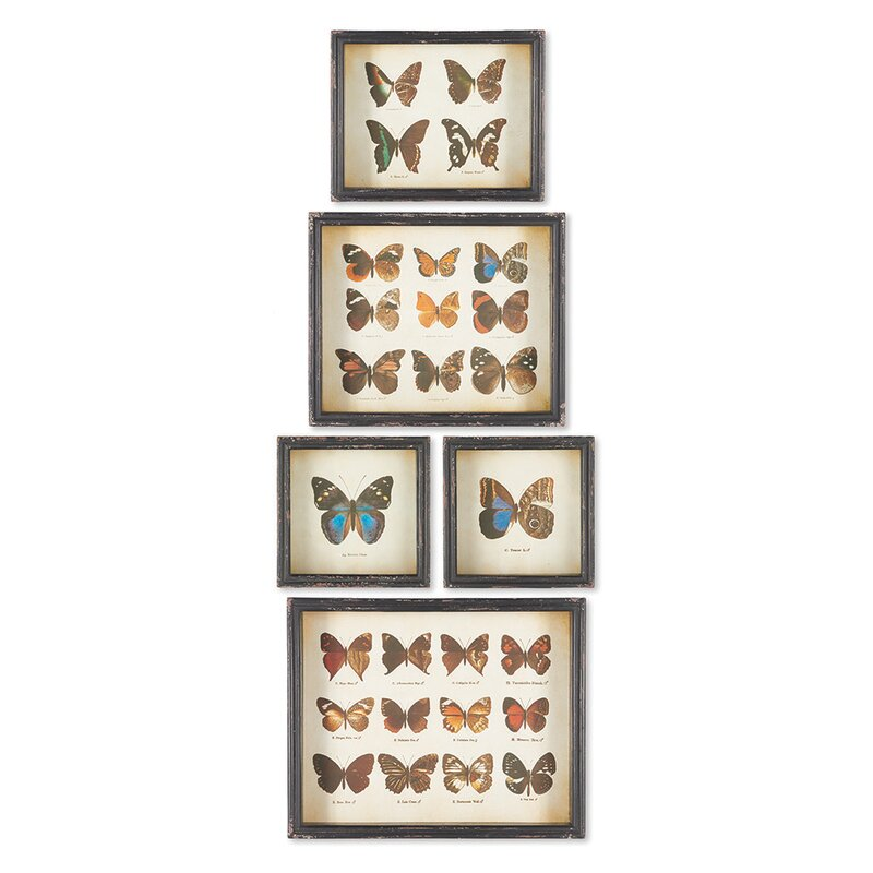 'Butterfly Specimens Shadow Box' 5 Piece Framed Graphic Art Print Set