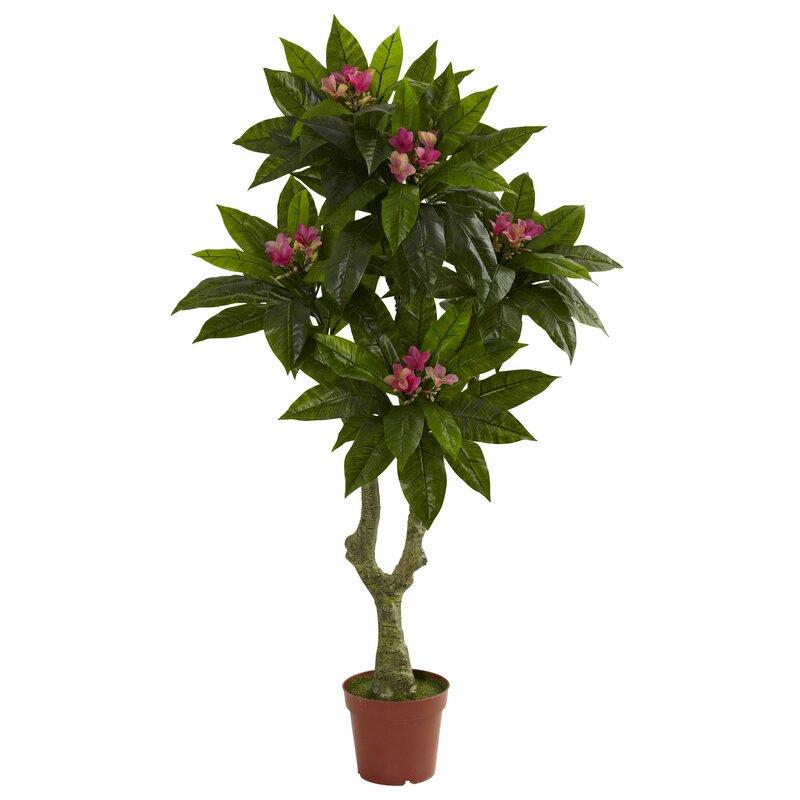 Plumeria Round Topiary in Pot