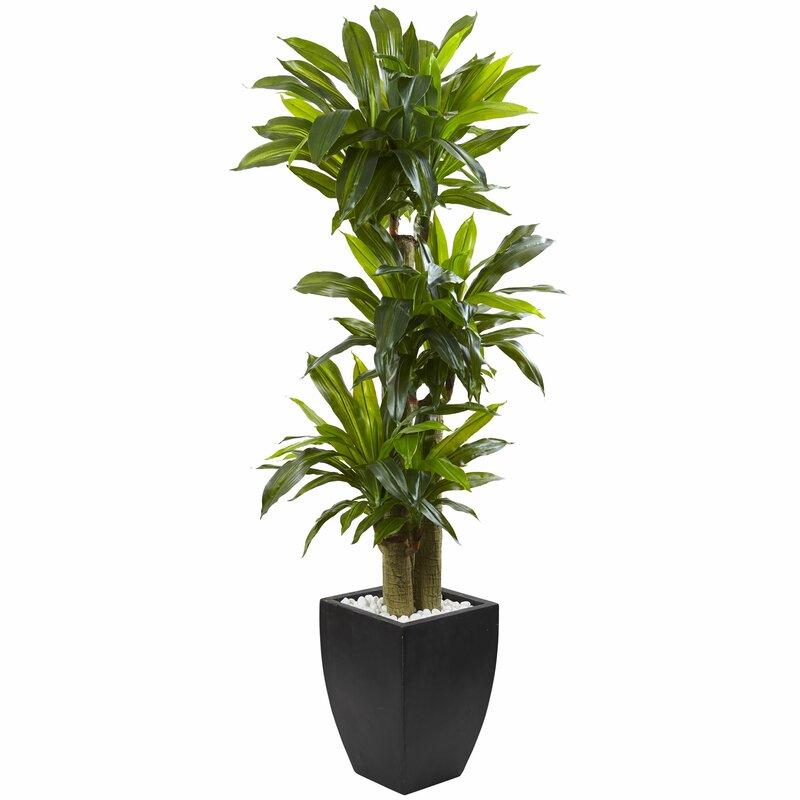 Corn Stalk Dracaena Floor Foliage Plant in Rectangular Planter