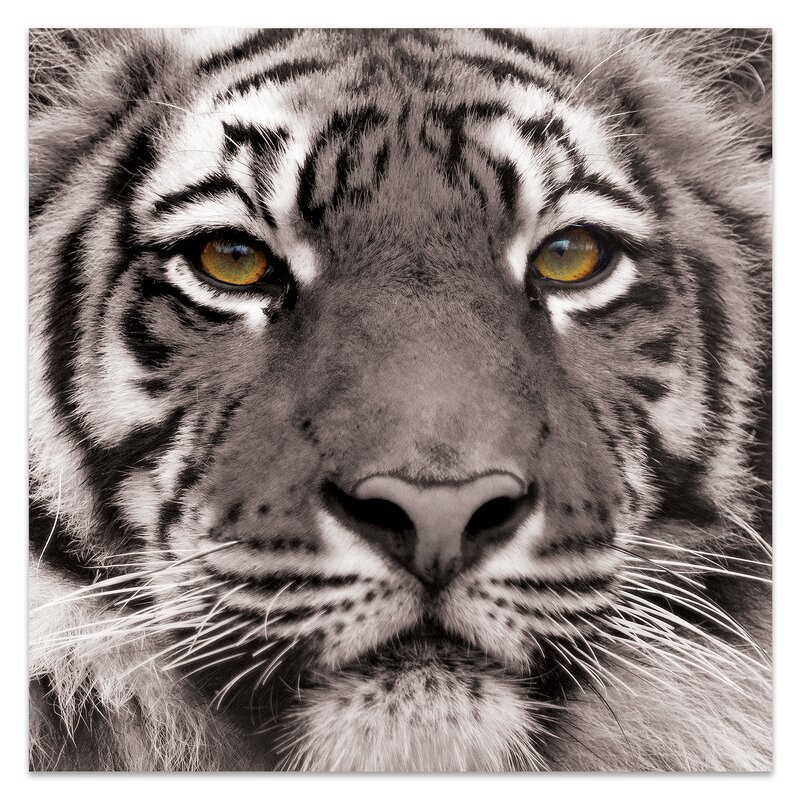 'Eye of the Tiger' Photographic Print on Glass