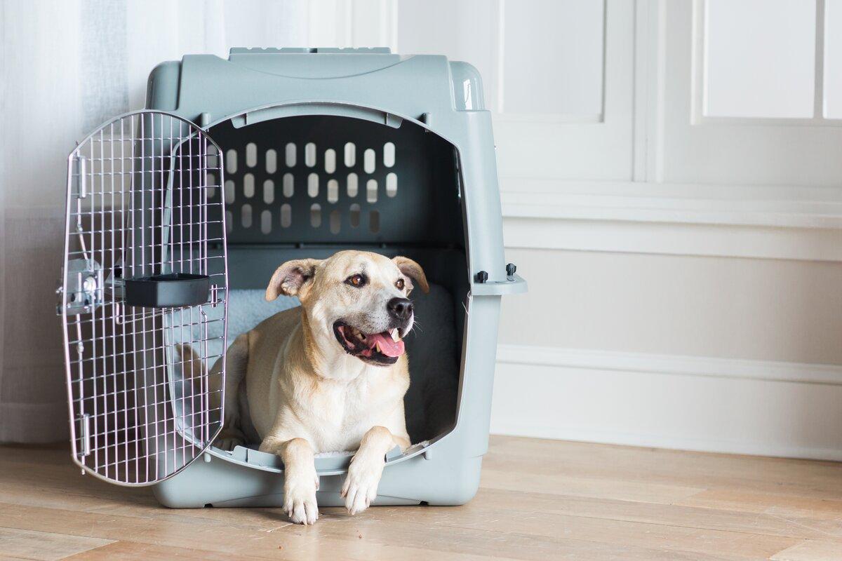 Sky Vault Door Yard Kennel Pet Crate