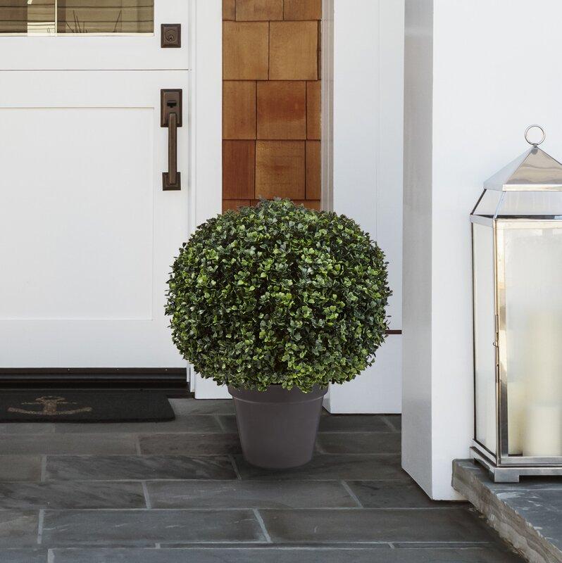 Boxwood Topiary in Planter