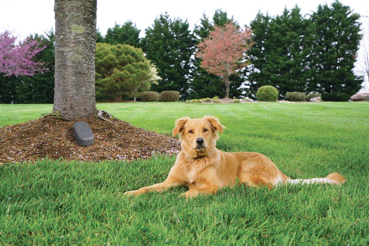 YardMax Cordless Dog Electronic Fence