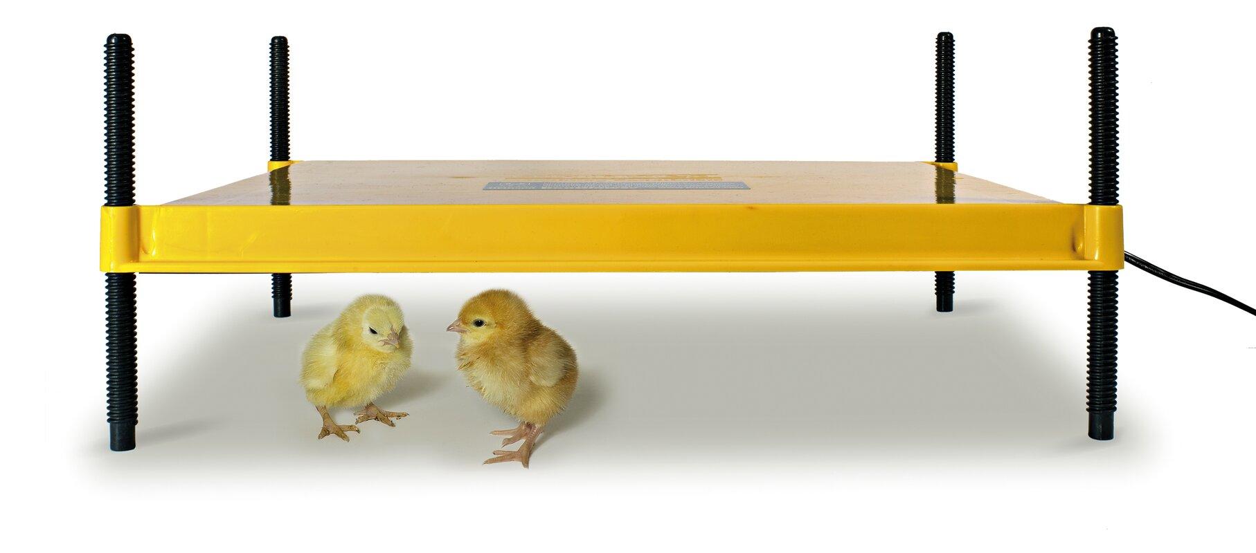 EcoGlow 50 Chick Brooder