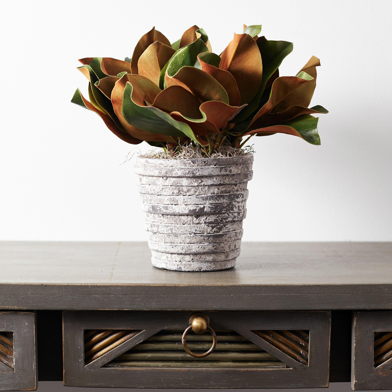 Gracie Oaks Real Touch Leaves Mangolia Floral Arrangement In Pot Wayfair