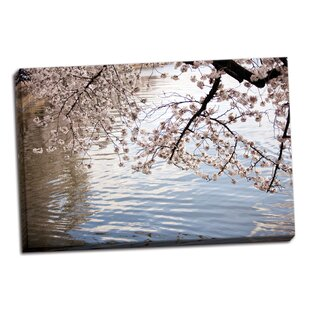 'Cherry Blossoms I' Photographic Print on Wrapped Canvas