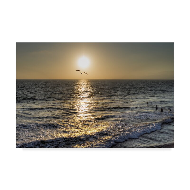 Trademark Art Seagull Flying Photographic Print On Wrapped Canvas Wayfair