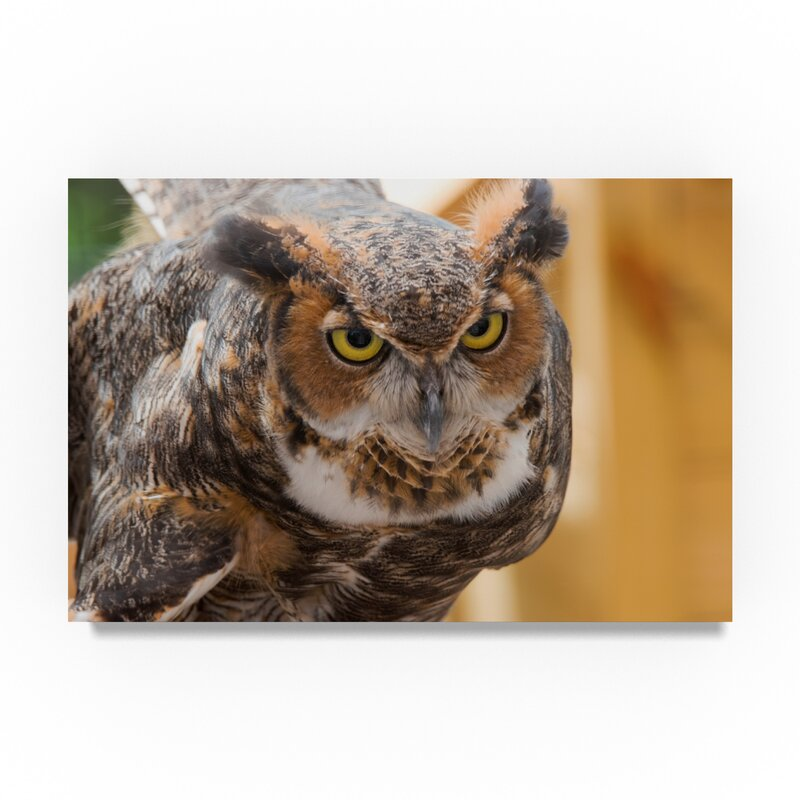 Trademark Art Great Horned Owl Photographic Print On Wrapped Canvas Wayfair