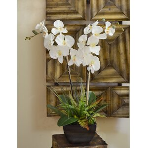 Fern and Foliage Orchid Floral Arrangement in Vase