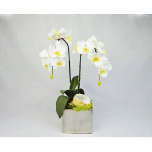 Orchid in Square Container with Quartz