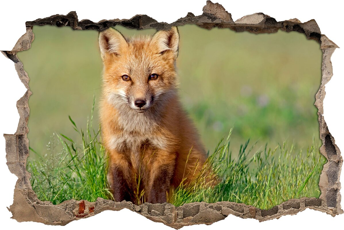 Attraktiv Wandtattoo Gras Ideen Von Junger Fuchs Im