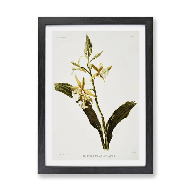 East Urban Home Magnolia Flowers Illustration Tab 69 By Frederick Sander Picture Frame Painting Print On Paper Wayfair Co Uk