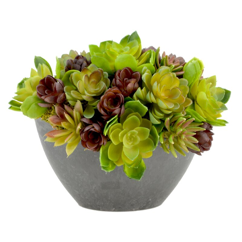 Wrought Studio  Cactus Arrangement Desk Top Plant in Decorative Vase