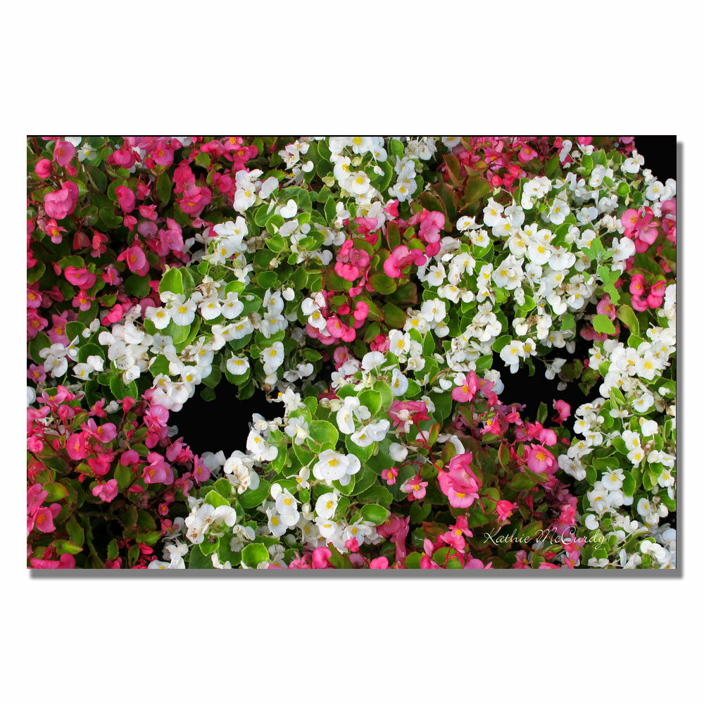 Trademark Art Begonia Garden By Kathie Mccurdy Framed