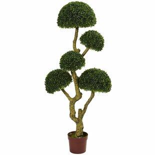 5' Five Head Boxwood Topiary