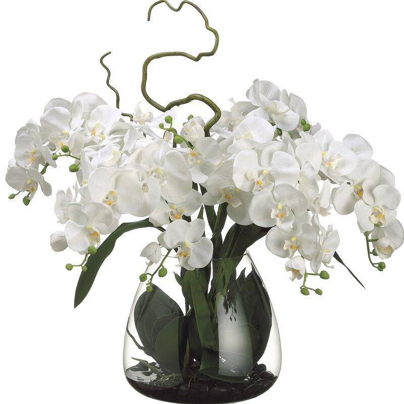 floral home decor orchid floral design wayfair.htm orren ellis phalaenopsis orchid floral arrangement in glass vase  orren ellis phalaenopsis orchid floral
