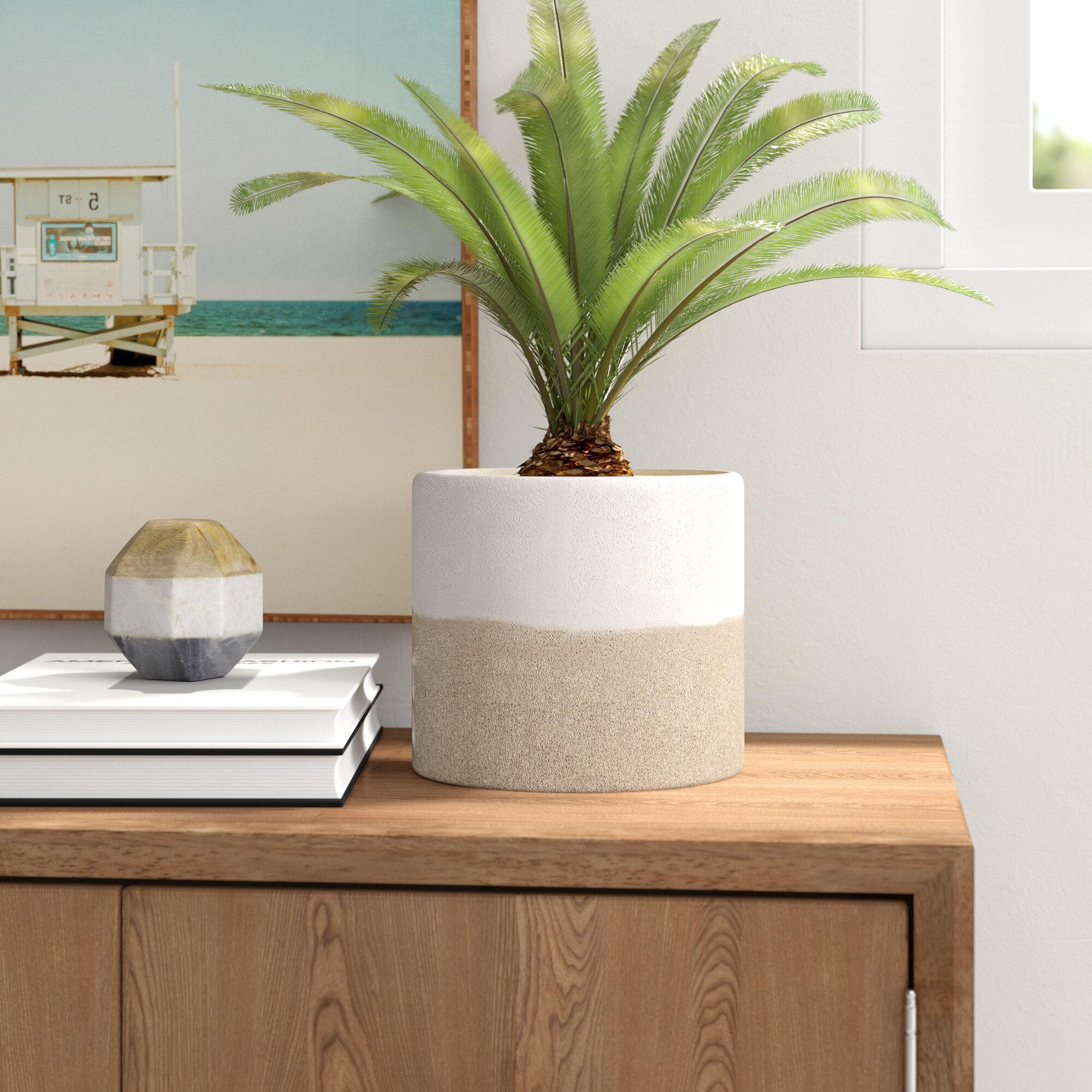 Barmore Ceramic Pot Planter Reviews Joss Main