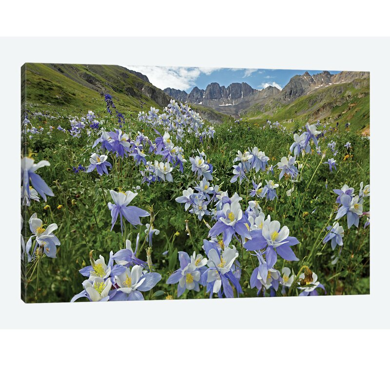 East Urban Home Colorado Columbine Flowers American Basin