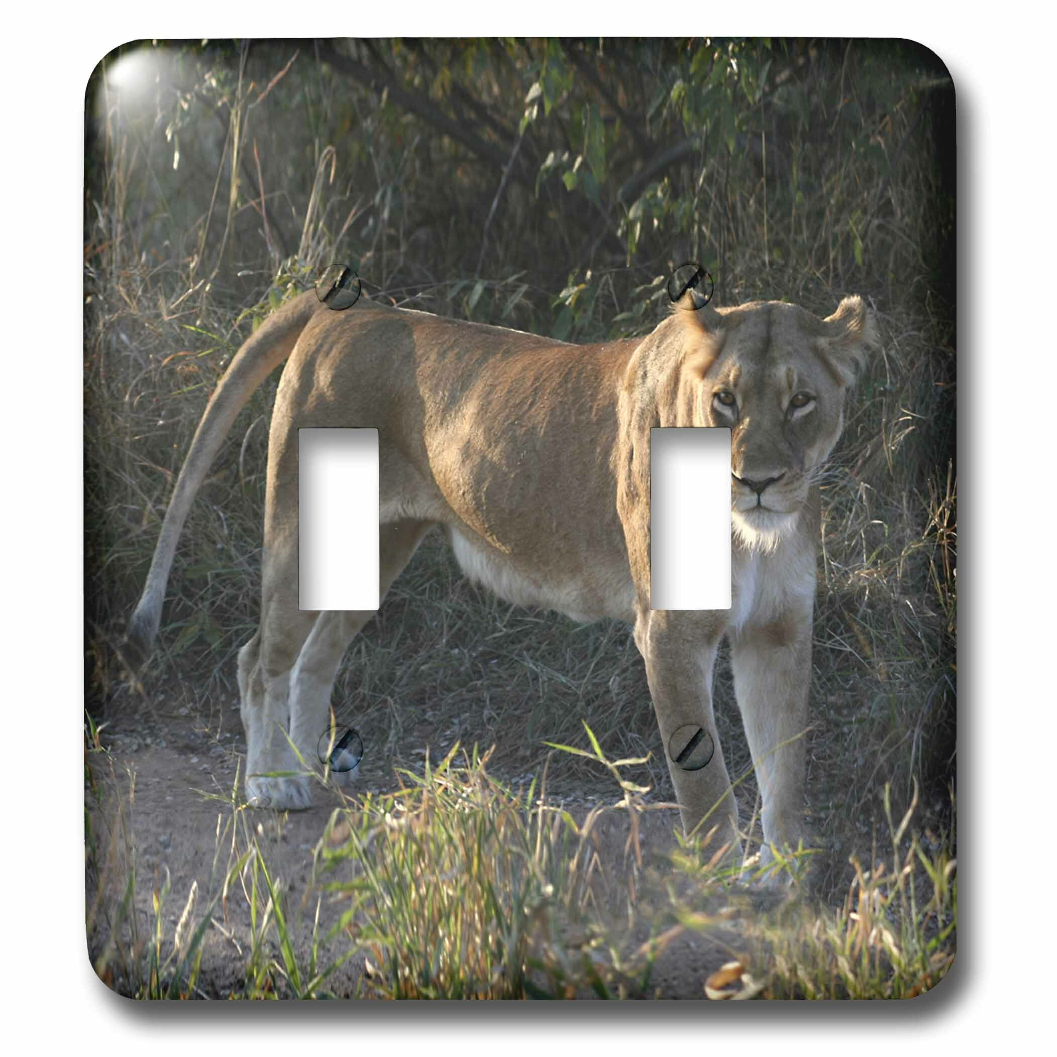 3drose Posing Looking In Both Directions Lioness Side View South African 4 Cheetahs 2 Gang Toggle Light Switch Wall Plate Wayfair