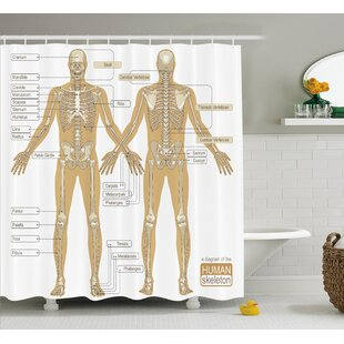 Purchase Human Anatomy Diagram of Human Skeleton System With Titled Main Parts of Body Joints Picture Shower Curtain ByAmbesonne