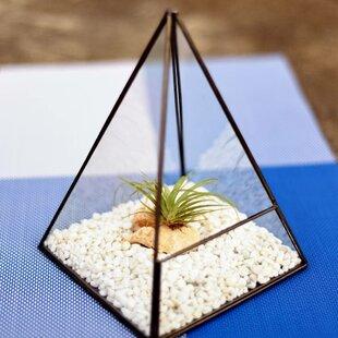 SantaClara Glass Terrarium By Freeport Park