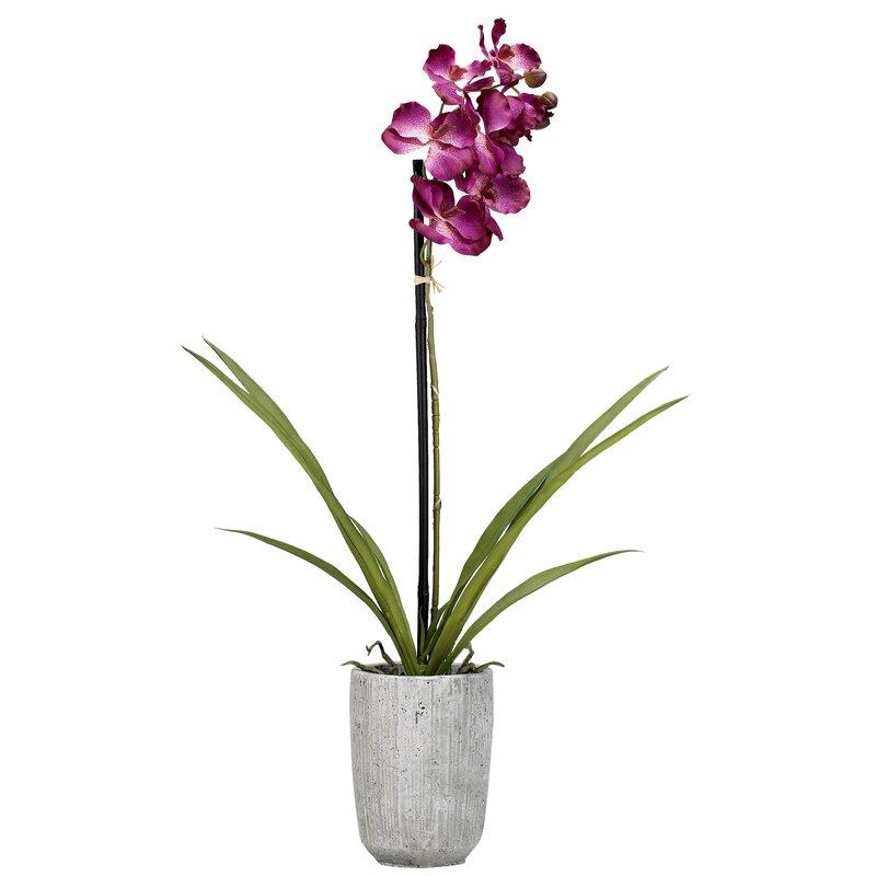 House Of Hampton Vanda Orchids Floral Arrangement In Planter Wayfair