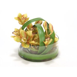 Waterlook Green Cymbidium Orchids in Glass Vase