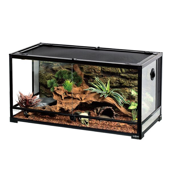 40 Gallon Terrarium Wayfair