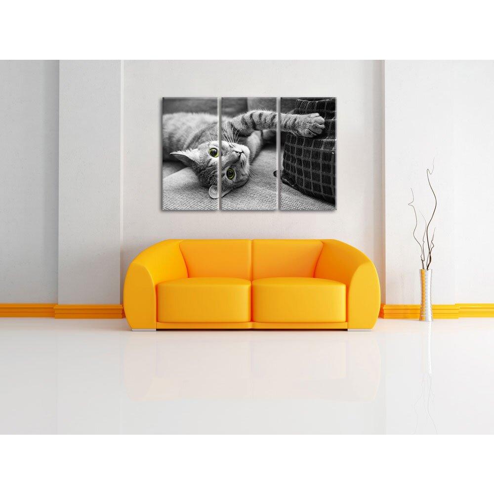 coyote spielt mit katze im wohnzimmer. Black Bedroom Furniture Sets. Home Design Ideas