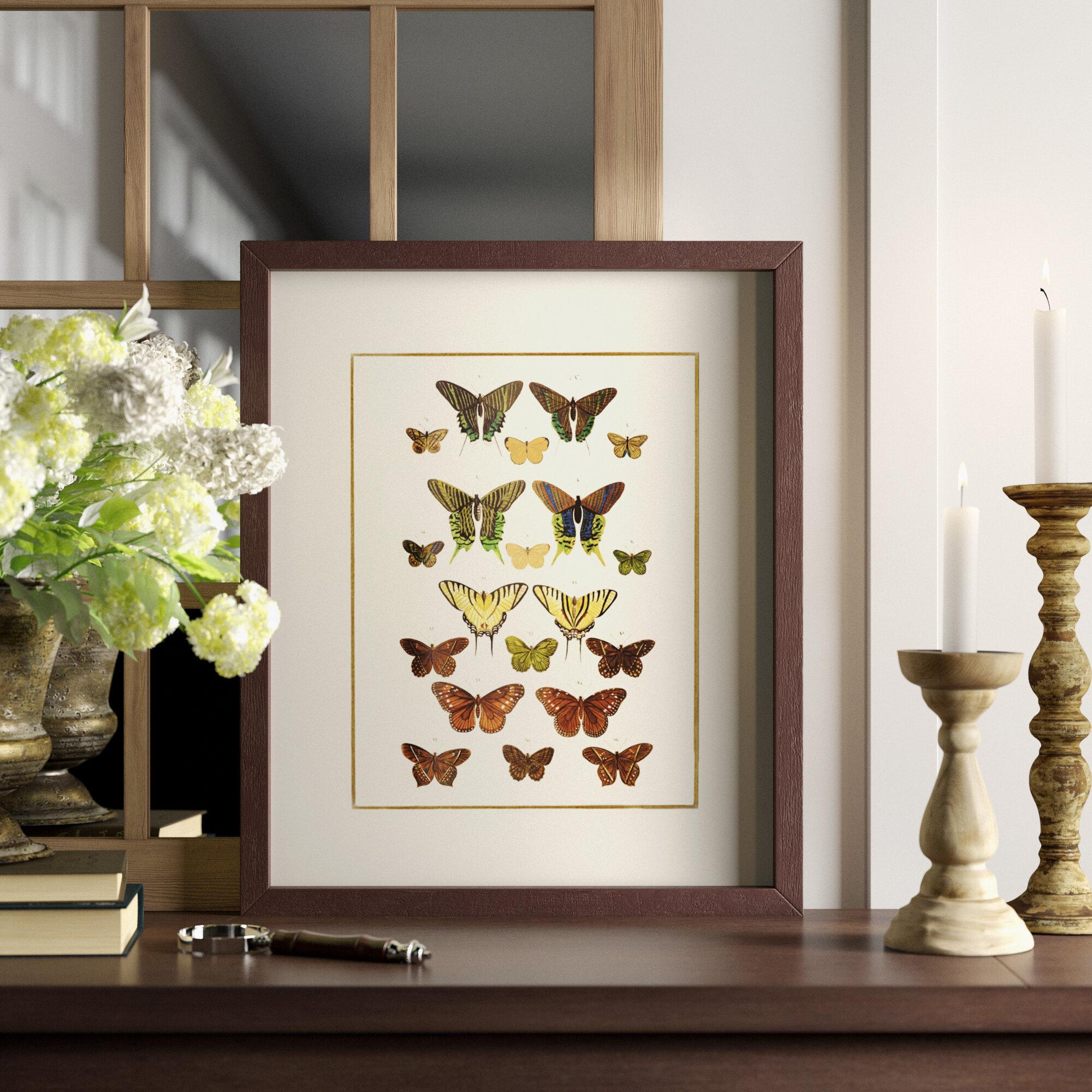 Papillon Picture Frame Graphic Art Print On Wood Reviews Birch Lane