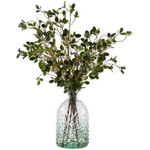Bonsai Ficus Branches Floral Arrangement