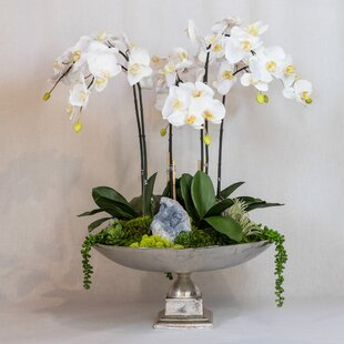Orchid and Celestite in Urn