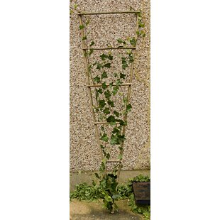 Northcutt Large Wall Trellis Image