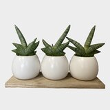 Live Snake Plant Faux Plants You Ll Love In 2021 Wayfair