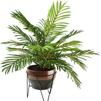 Bay Isle Home Floor Poenix Palm Plant in Pot