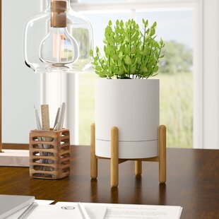 Mauro Tabletop Plant Stand by George Oliver