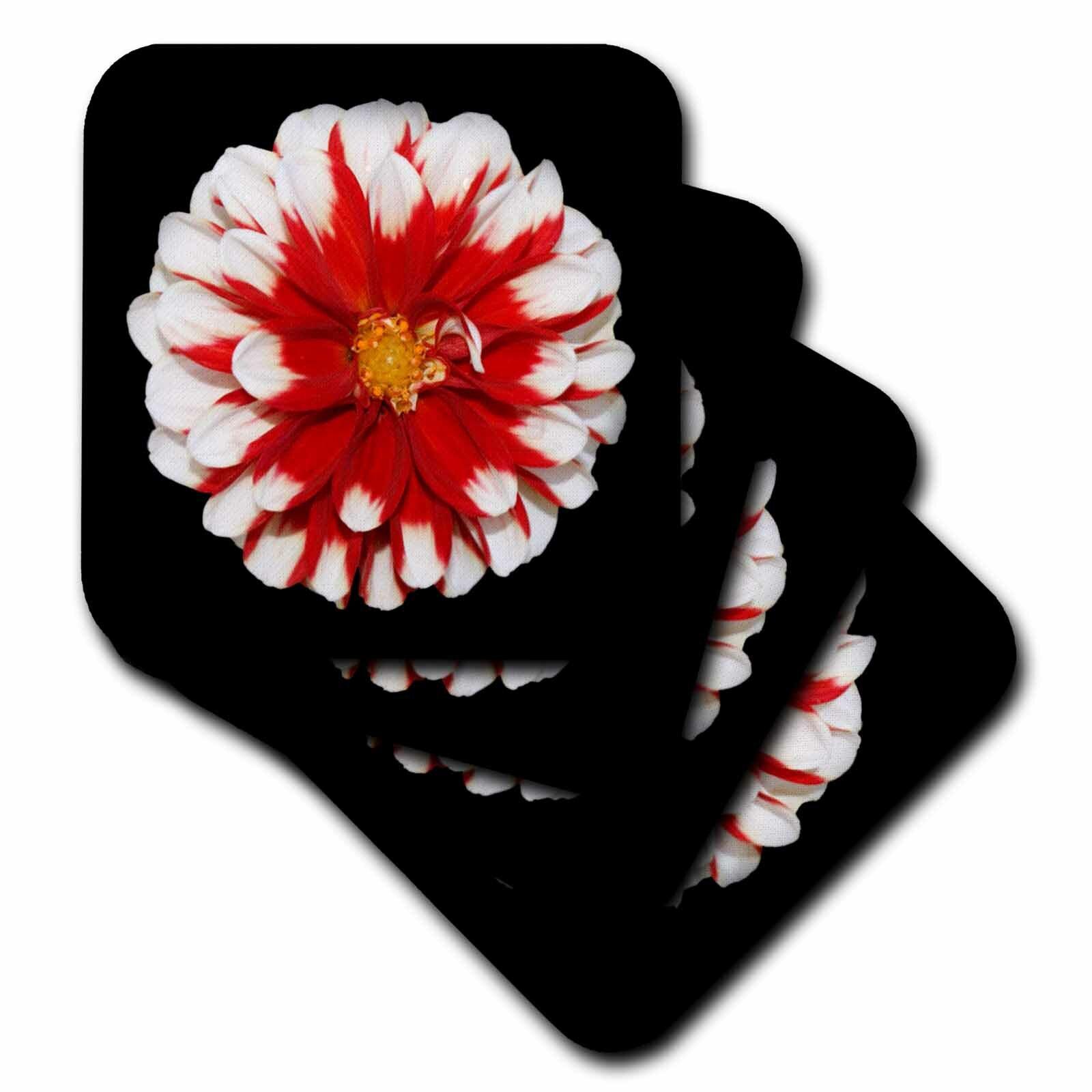 3drose Ceramic Tile Coasters Christmas Flower Set Of 4 Cst 6208 3 Wayfair