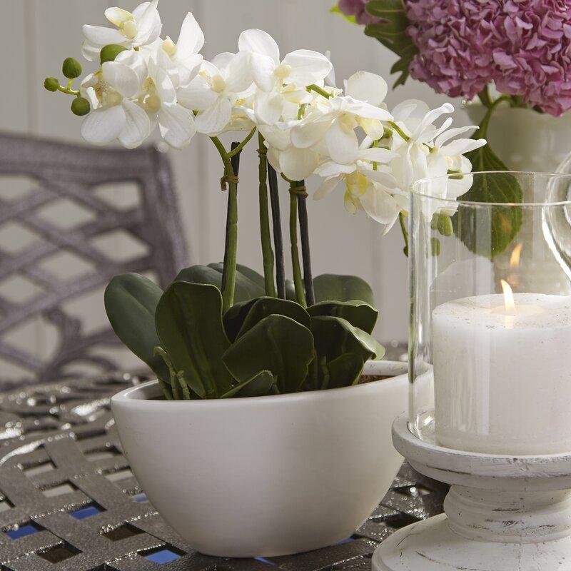 Phalaenopsis Silk Flowers In Pot Reviews Joss Main