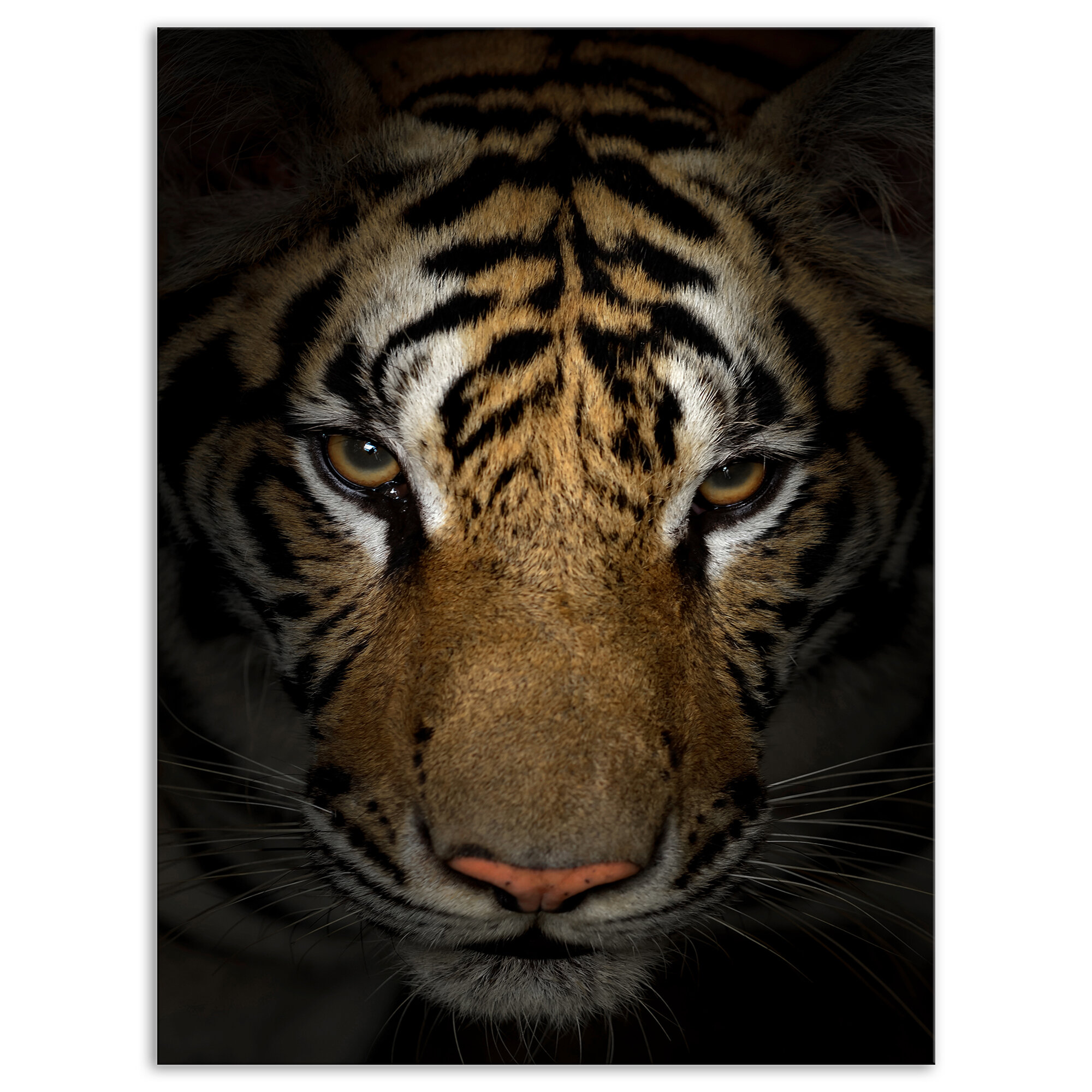 East Urban Home Brown Tiger Face In The Dark Graphic Art Print On Wrapped Canvas Wayfair